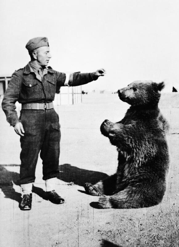 Wojtek_the_bear.jpg